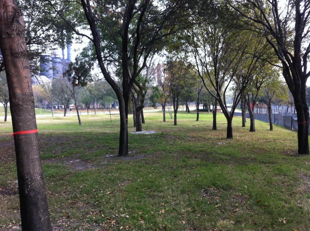 Àrea jardinada de 16 mil 987 metros cuadrados y con unos 75 árboles sanos donde se busca construir un estacionamiento con 232 cajones.